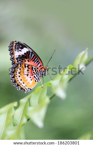 Closeup shot of beautiful butterfly on a branch - stock photo