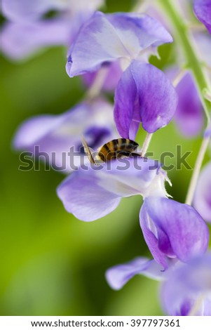 Closeup shot of bee at work on violet flower collecting pollen
