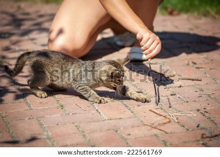 Closeup shot of little girl playing with kitten outdoor - stock photo