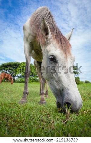 Closeup shot of the hoof of a grey horse - stock photo