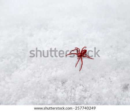 closeup shot showing a small red toned spider on frosty surface - stock photo