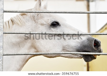 Closeup shot with the head of a white horse inside a pen - stock photo