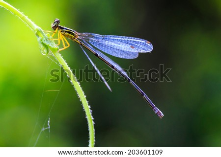 Closeup small dragonfly on green vine - stock photo