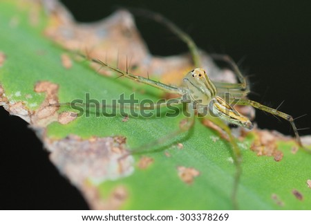 closeup spider nature background