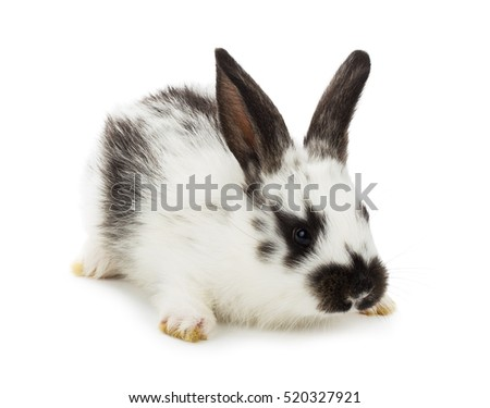 closeup spotted little rabbit, isolated on white
