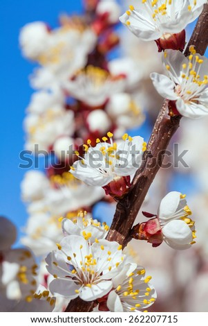 closeup spring blossoms. spring in nature concept. - stock photo