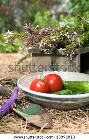 Closeup still life of first red tomatoes and cucumbers of the season in a pretty organic garden - stock photo