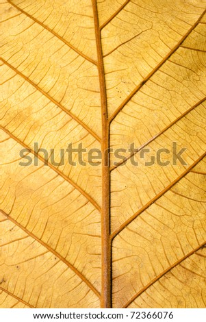 Closeup Structure of Grunge Dry Leaf Texture use a a Background