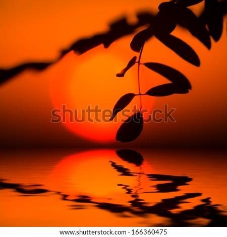 closeup sunset over a lake - stock photo
