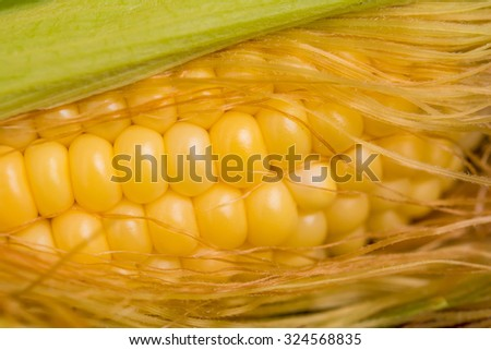 Closeup sweet corn cob in peel. Shallow depth of field - stock photo
