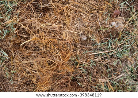 Closeup texture of old hay and dry leaves