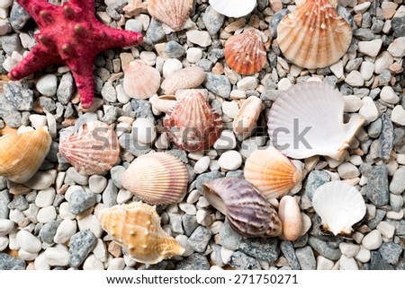 Closeup texture of sea bottom covered with colorful seashells and starfishes - stock photo
