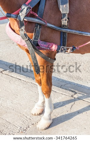 Closeup the horse legs with horseshoe and harness clipping path. - stock photo