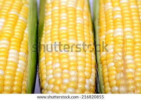 closeup three fresh sweet corns in cob  - stock photo