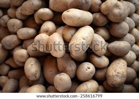 closeup top view of raw fresh potato stack  - stock photo
