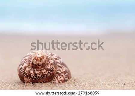 closeup tropical shell on sunny beach, natural summer  soft focus background - stock photo
