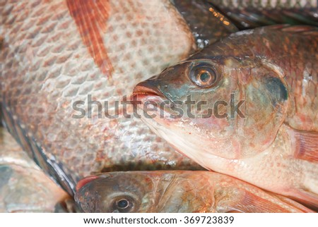 closeup variety of fresh fish seafood in market