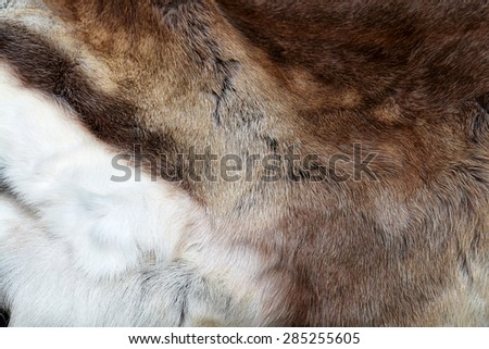 Closeup view details of an animal fur texture background image
