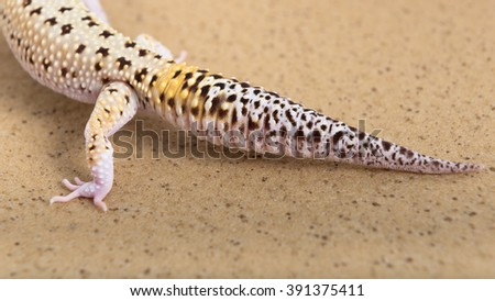 Closeup view of a gecko tail - stock photo