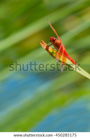 Closeup view of a red dragonfly - stock photo