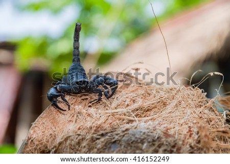 Closeup view of a scorpion in nature. - stock photo