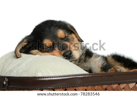 Closeup view of a tired puppy dog having a nap, isolated against a white background. - stock photo