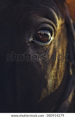 Closeup view of an alert black horse eye with reflections. Shallow depth of field. - stock photo