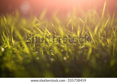Closeup view of beautiful fresh bright green lush spring grass on meadow in sunny warm weather morning on natural background, horizontal picture - stock photo
