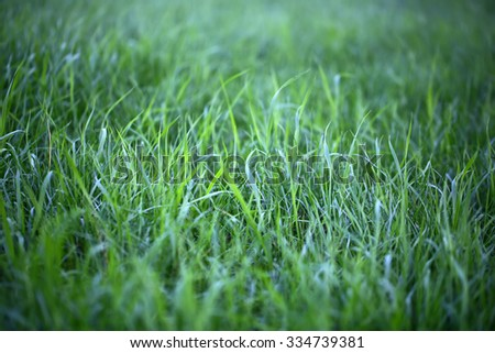 Closeup view of beautiful fresh bright green lush spring grass on meadow on natural background, horizontal picture - stock photo