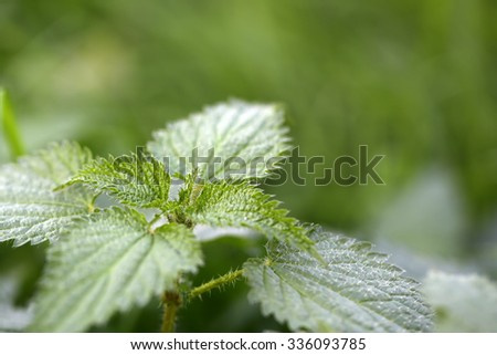 Closeup view of beautiful fresh bright green lush spring young plant with leaves in sunny warm weather morning on natural background, horizontal picture - stock photo