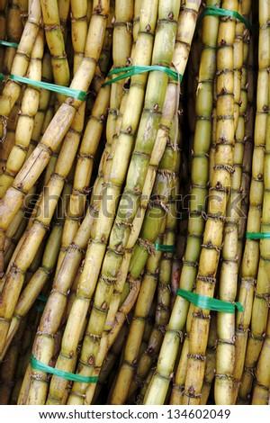 Closeup view of bundles of freshly harvested sugar cane stalks. - stock photo