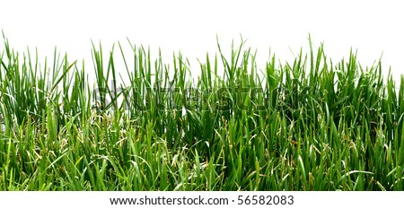 Closeup view of grass along the water's edge - stock photo