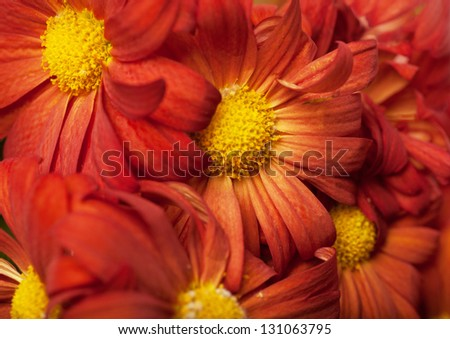 Closeup view of heap of bright red flowers - stock photo
