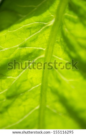 Closeup view of leaf veins - stock photo