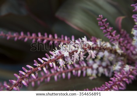 Closeup view of many little violet thin flowers on fresh long light green stem in lush beautiful wild plant bush on natural blurred background, horizontal picture - stock photo