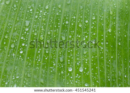 closeup water drop on green fresh banana leaf