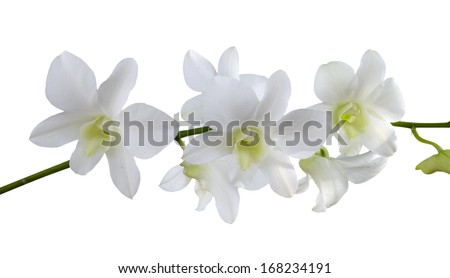 Closeup white orchids on white background