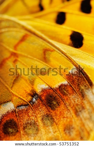 Closeup wings of butterfly with black veined - stock photo