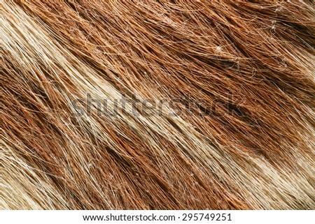 Closeup wolf fur texture - stock photo