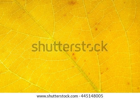 Closeup Yellow leaf natural background. Color of leaf fall season. Detail leaf nature pattern or texture. Shallow depth of field. - stock photo