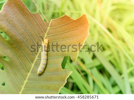 Closeup yellow worm on leaf with bright sunlight - stock photo