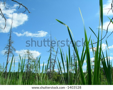 Closup of swam plant on cloudy blue sky background