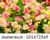 Cloth pink roses - stock photo