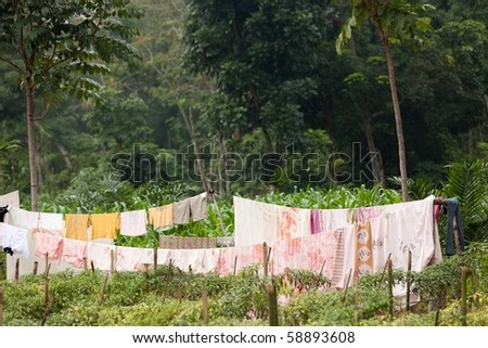 clothes on line in tropical rainforest, indonesia