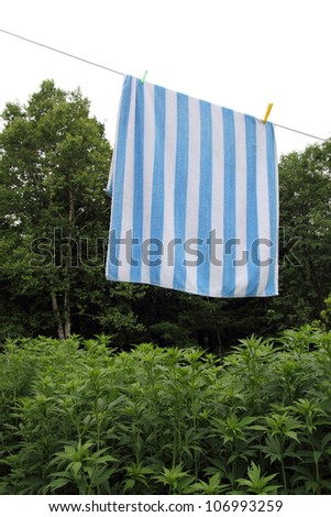 clothesline with a stripped towel drying over a green forest and white sky - stock photo