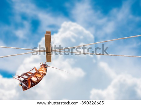 clothespin and cockroach on rope in the sky - stock photo