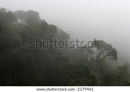 Cloud Forest, Ecuador - stock photo