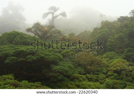 Cloud forest in Costa Rica - stock photo