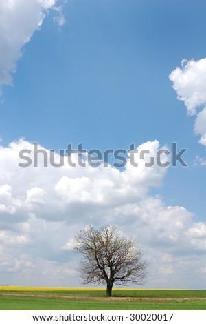 Cloud over dry tree - stock photo