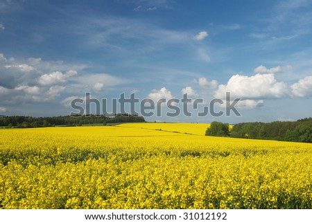 Clouds above abloom oilseed rapeseed field
